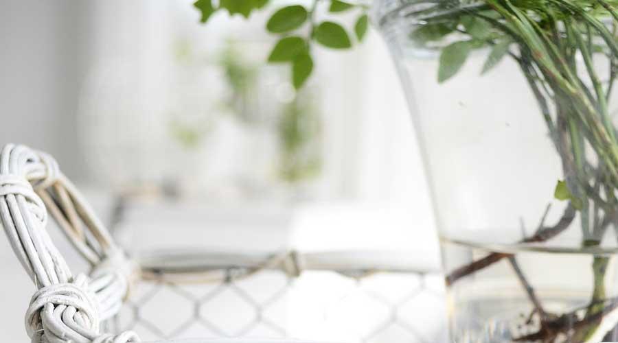 Come-realizzare-un-giardino-acquatico-Indoor