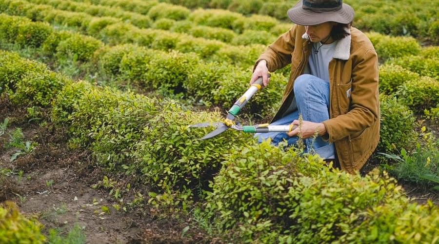 Manutenzione giardino fai da te